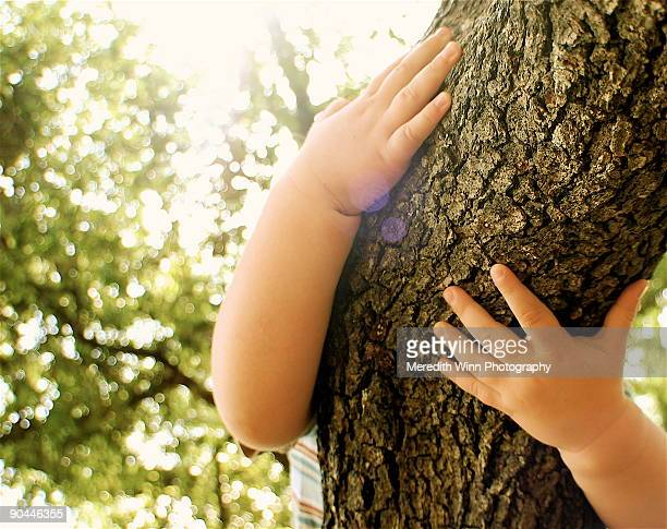 Hands of a child holding and hugging a tree