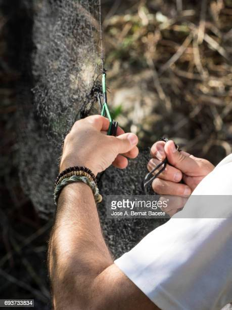 Hands of a woman setting up a trap with nets. Battery of networks prepared in the field to catch birds, (Japanese Network), Spain