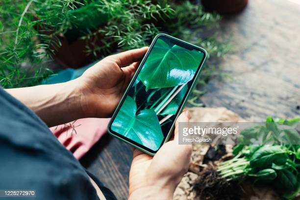 hands of a woman taking a photo of her house plants with a obile phone - green thumb stock pictures, royalty-free photos & images