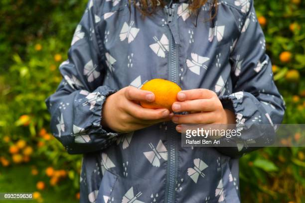Hands of a young girl picking fruit