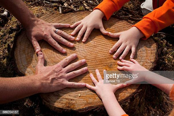 Hands of father and children on a tree stump