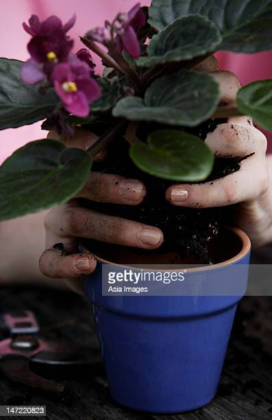 hands of gardener with potted plant