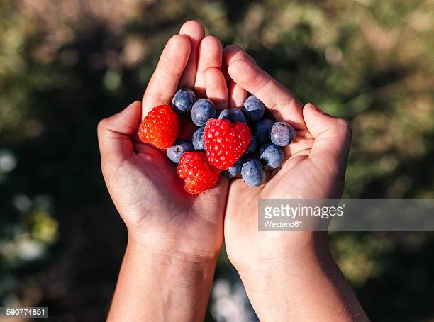 hands of little girl holding blueberries and raspberries - handful stock pictures, royalty-free photos & images