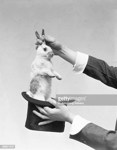 Hands of magician performing magic trick pulling rabbit out of top hat