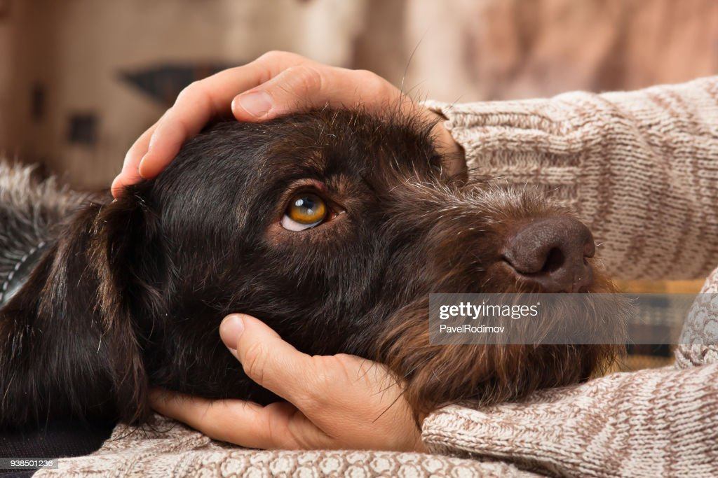hands of owner petting a dog : Stock Photo