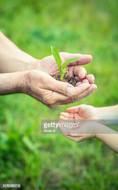 Hands of senior man and child holding green plant