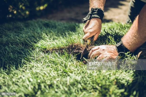 hands of senior man cutting rolled grass to fit - turf stock pictures, royalty-free photos & images