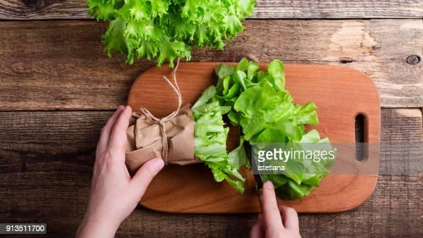 hands of woman slice green leaf lettuce - lettuce imagens e fotografias de stock