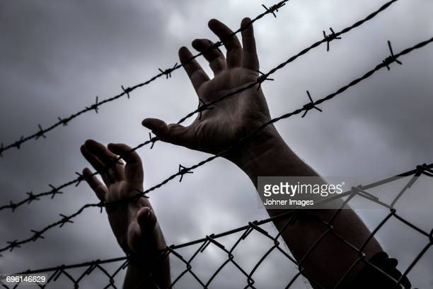 hands on barb wire - barbed wire stock pictures, royalty-free photos & images