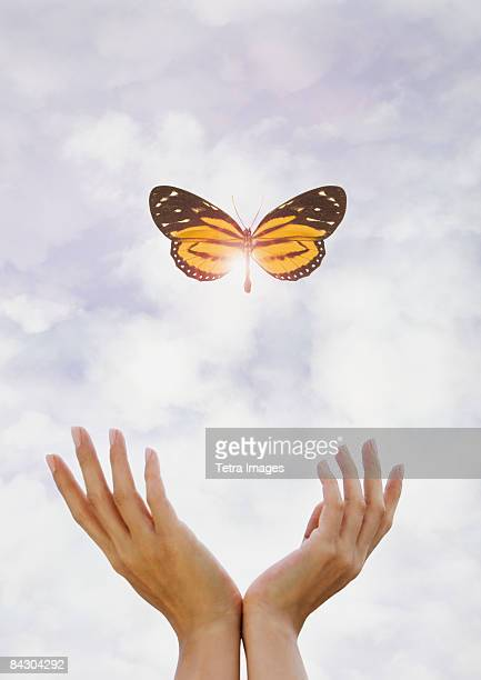 hands releasing butterfly - releasing stock photos and pictures
