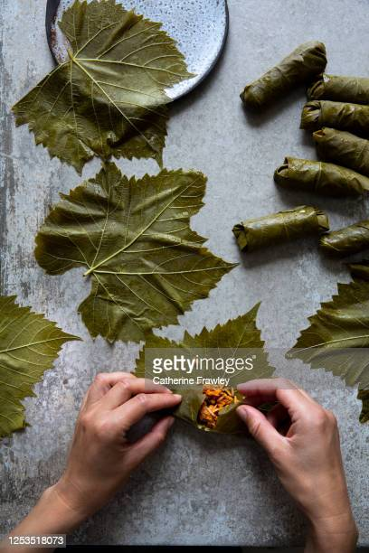 hands rolling stuffed vine leave (koupepia / dolmades ) - dolmades stock pictures, royalty-free photos & images