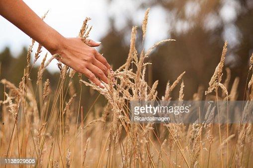 Hände Streicheln Die Blumen Stock-Foto - Getty Images