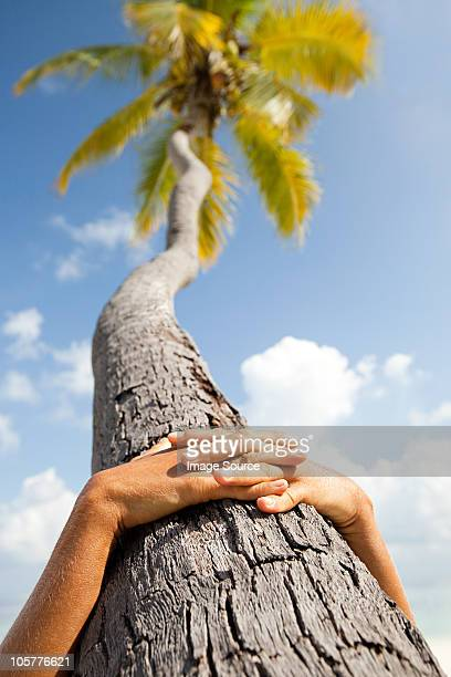 Hands together on palm tree, Maadaugalla Island, North Huvadhu Atoll, Maldives