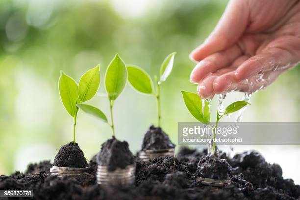 hands watering young plants growing in germination sequence on golden coins , business concept - morality stock pictures, royalty-free photos & images