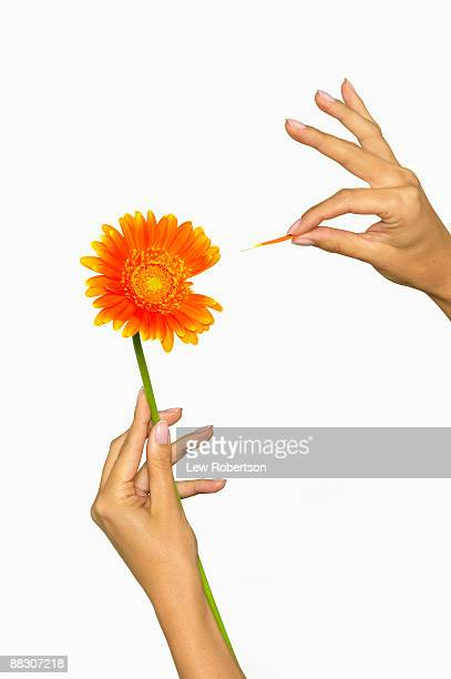 Hands with a daisy