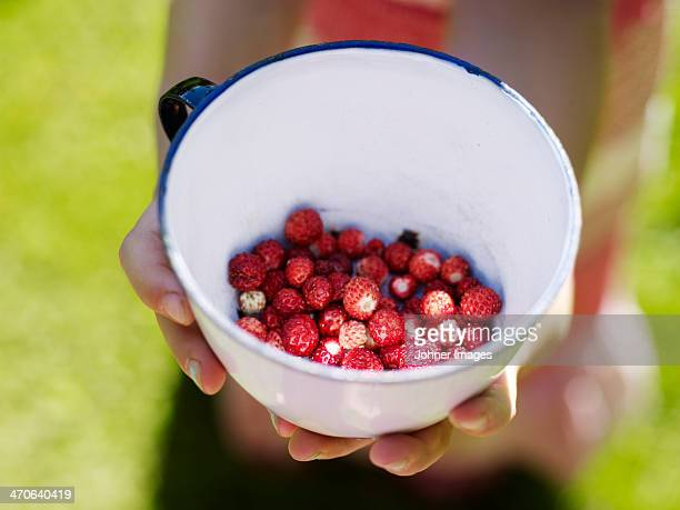 Hands with bowl with wild strawberries