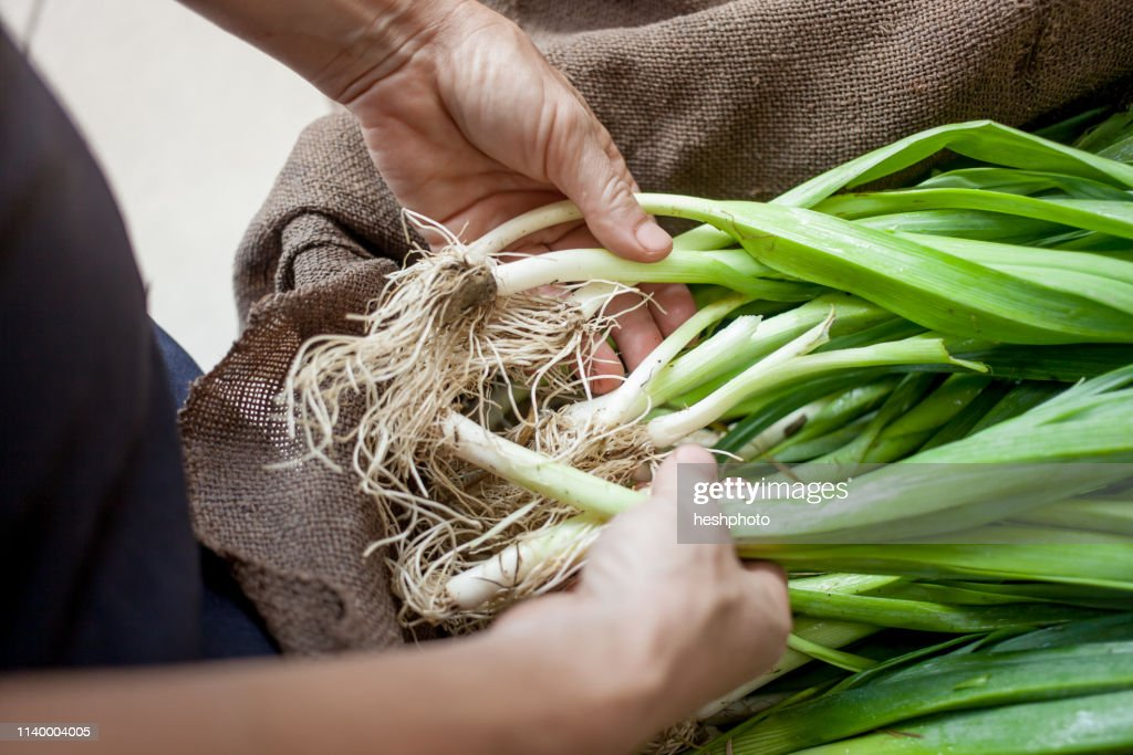 Hands with organic spring onions : Stock Photo