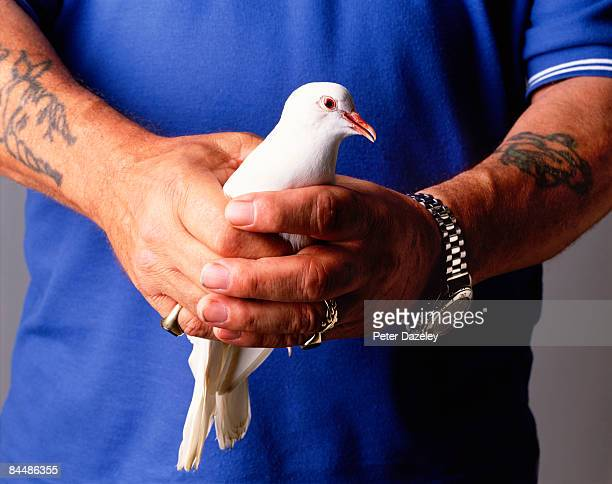 hands with peace dove - releasing stock pictures, royalty-free photos & images