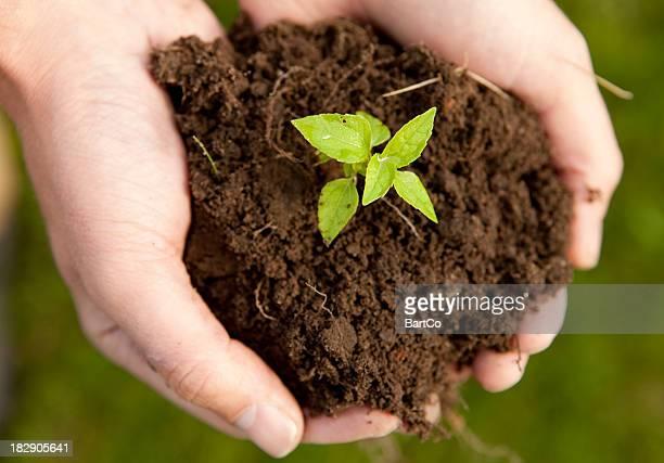 Main avec plant.