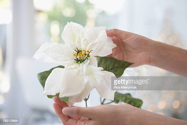 Hands with poinsettia