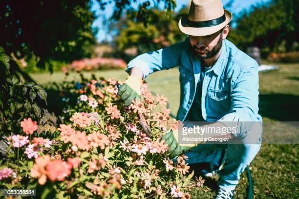 Gut aussehend Gärtner die Zinnie Blumen dekorieren