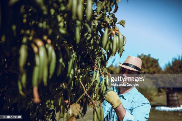 Gut aussehend Gärtner trimmen den Busch