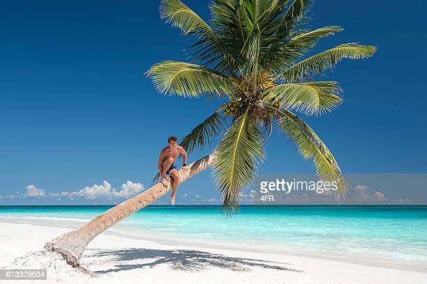 handsome man climbing a palm tree, tropical dream beach - gay men swimwear stock pictures, royalty-free photos & images