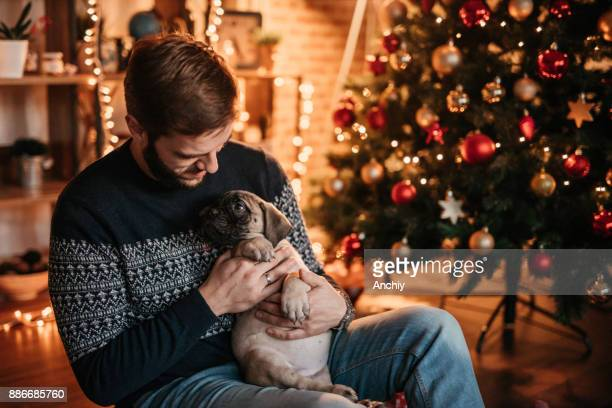 handsome man holding puppy in front of a christmas tree - bull mastiff stock pictures, royalty-free photos & images