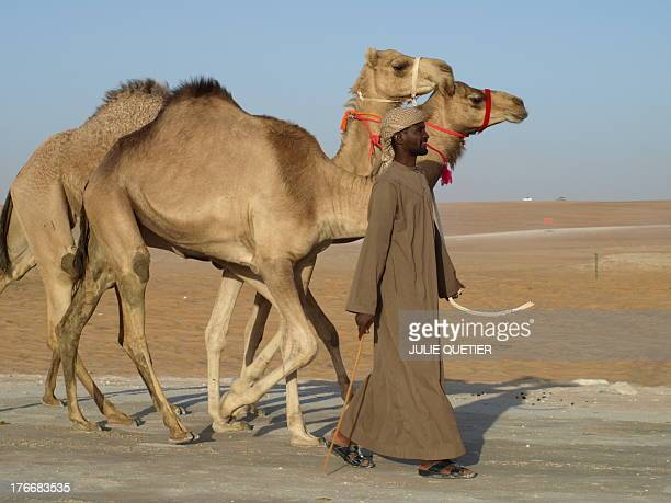 Handsome man walking with two camels in the Empty Quarter desert during the Al Dhafra camel festival in january of 2010 in the emirate of Abu Dhabi,...