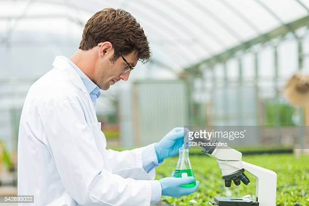 Handsome scientist at test lab for plants