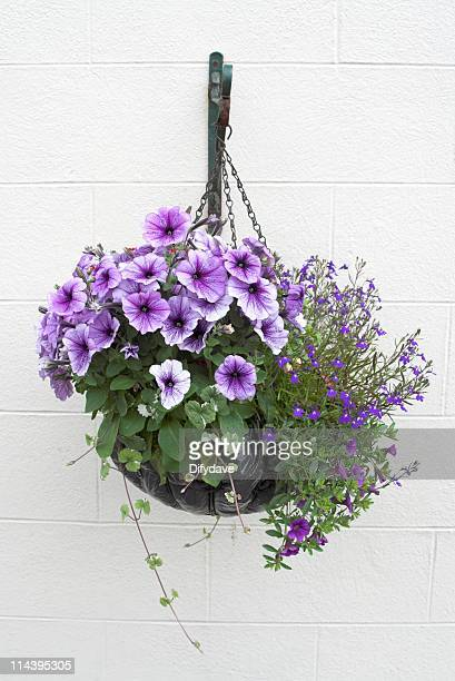 Hanging Basket Of Flowers On White Wall