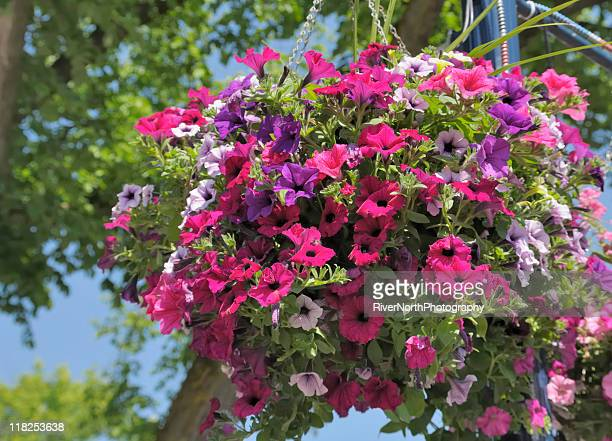 hanging basket - hanging basket stock pictures, royalty-free photos & images