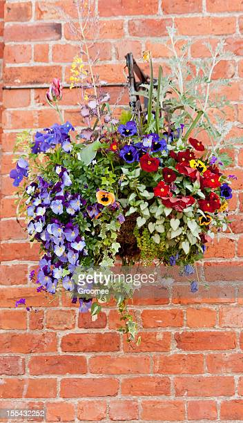 hanging basket. - hanging basket stock pictures, royalty-free photos & images