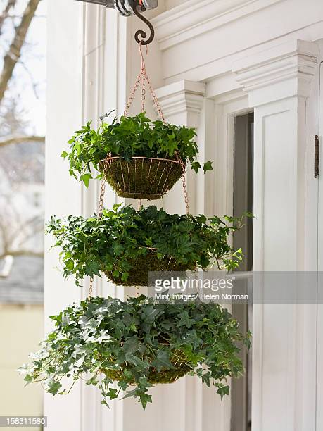 a hanging basket with three tiers of green plants with a cascading habit on a house porch. - hanging basket stock pictures, royalty-free photos & images