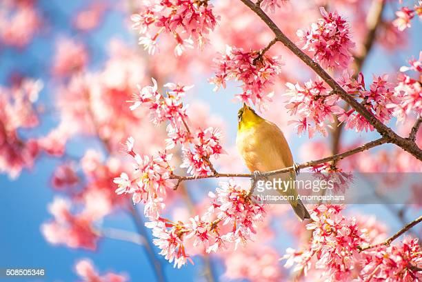 Hanging bird on a Sakura tree