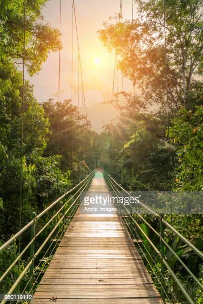 hanging bridge in tenorio volcano national park, costa rica - 熱帯雨林 ストックフォトと画像