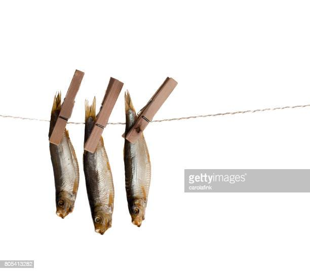 hanging fishes - carolafink stock-fotos und bilder