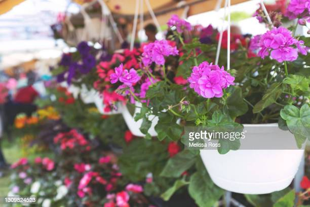 hanging flower baskets - hanging basket stock pictures, royalty-free photos & images