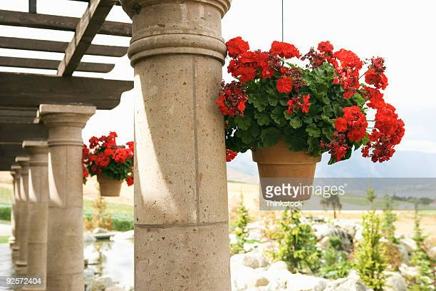 hanging flower baskets - pergola photos et images de collection