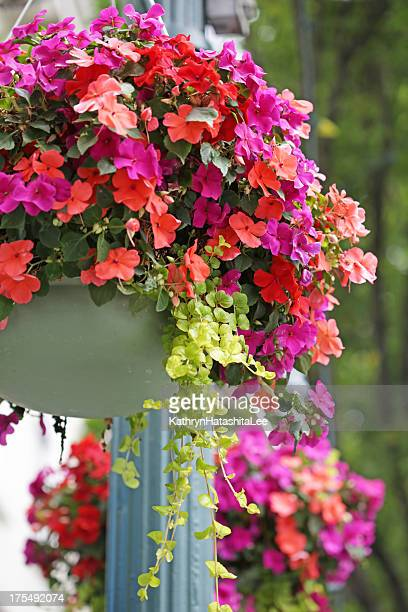 hanging flower baskets, street lamp in victoria, british columbia, canada - hanging basket stock pictures, royalty-free photos & images