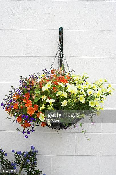 hanging flower pot with bright flowers - hanging basket stock pictures, royalty-free photos & images