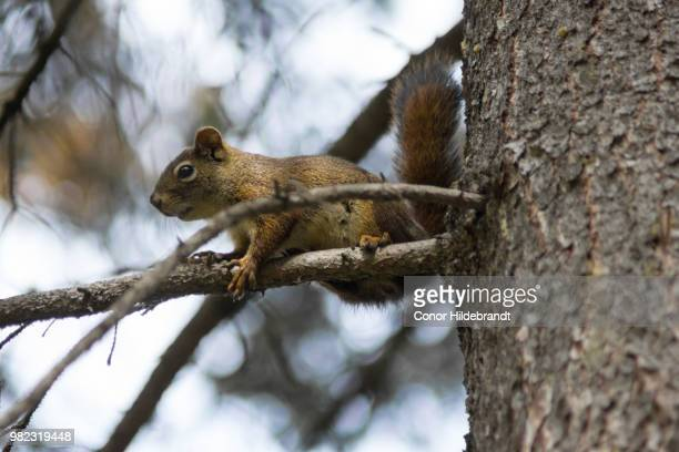 hanging out - conor stock pictures, royalty-free photos & images