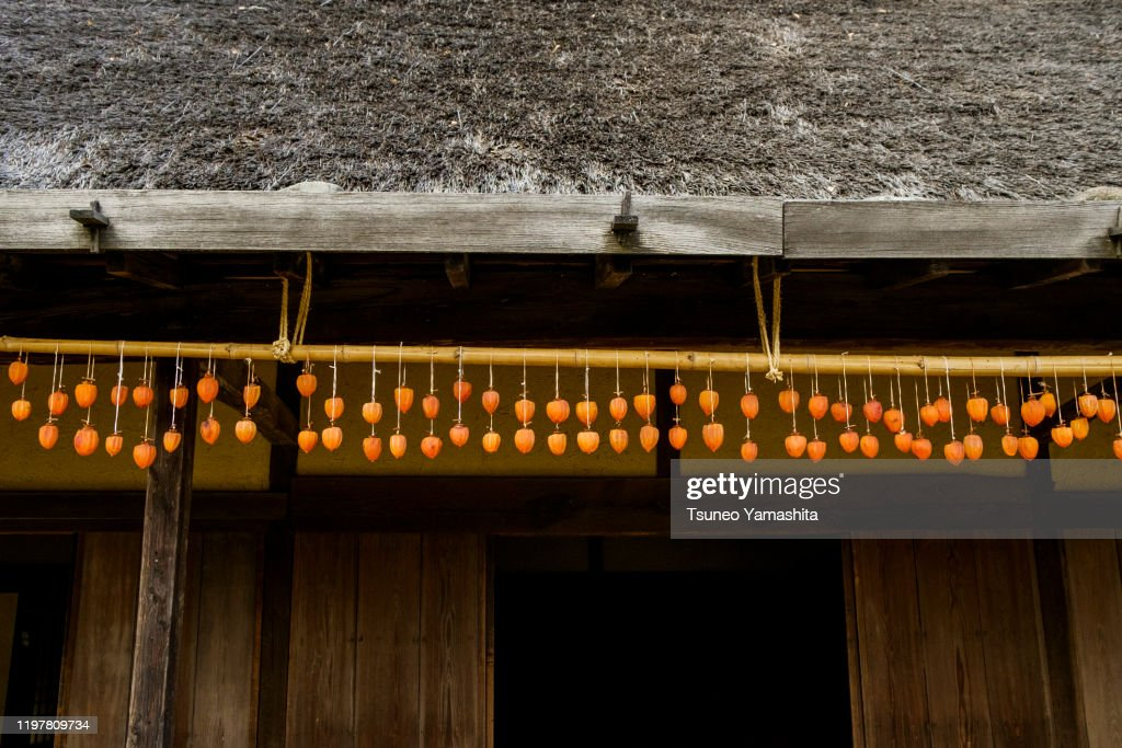 Hanging persimmons to dry : ストックフォト