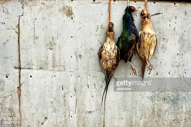 hanging pheasants - hanging death photos stock pictures, royalty-free photos & images