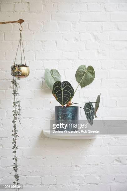 Hanging plants display