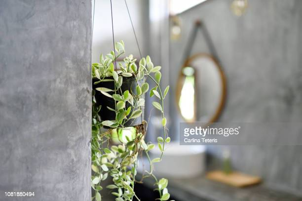 hanging plants in a luxury concrete bathroom - hanging basket stock pictures, royalty-free photos & images
