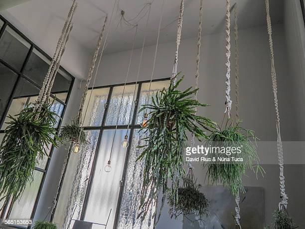 hanging plants - hanging basket stock pictures, royalty-free photos & images