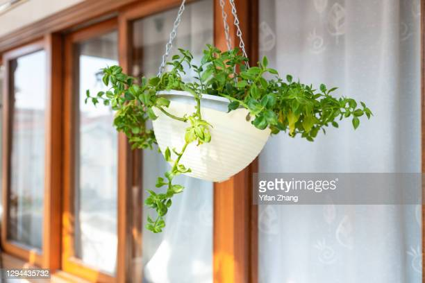 a hanging pot plant  in the balcony - changzhou stock pictures, royalty-free photos & images