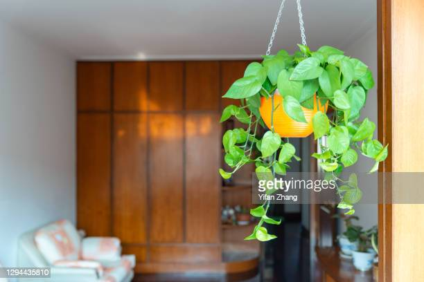a hanging potted plant in the living room - changzhou stock pictures, royalty-free photos & images
