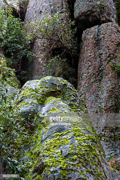 a moss and bryophyte colony growing on the surface of a rock pillar made of solvsbergite. - mamelon photos stock pictures, royalty-free photos & images